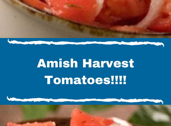 Amish Harvest Tomatoes!!!!